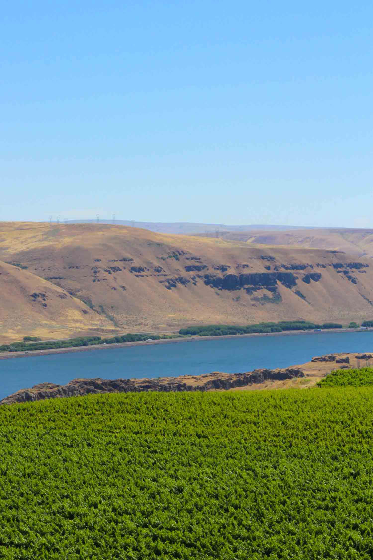 A Walla Walla Wine Tasting trip not to be forgotten! An extensive overview of my places to see and things to do in Walla Walla, Washington. | platingsandpairings.com