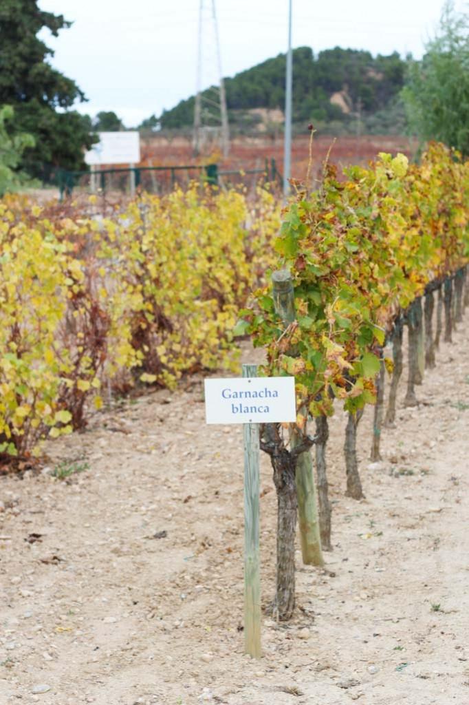 Wine Tasting in the Penedès Region of Spain - Less than 1 hour outside of Barcelona | platingsandpairings.com