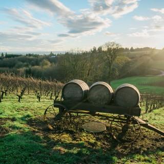 De Ponte Cellars Wine Tasting