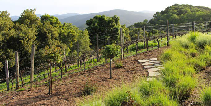Holman Ranch is an ideal location in the hills above Carmel Valley perfect for special events and weddings. The grounds feature a stone hacienda, sweeping views, and an olive grove. While their estate vineyard produces amazing Chardonnay, Pinot Gris and Pinot Noir.