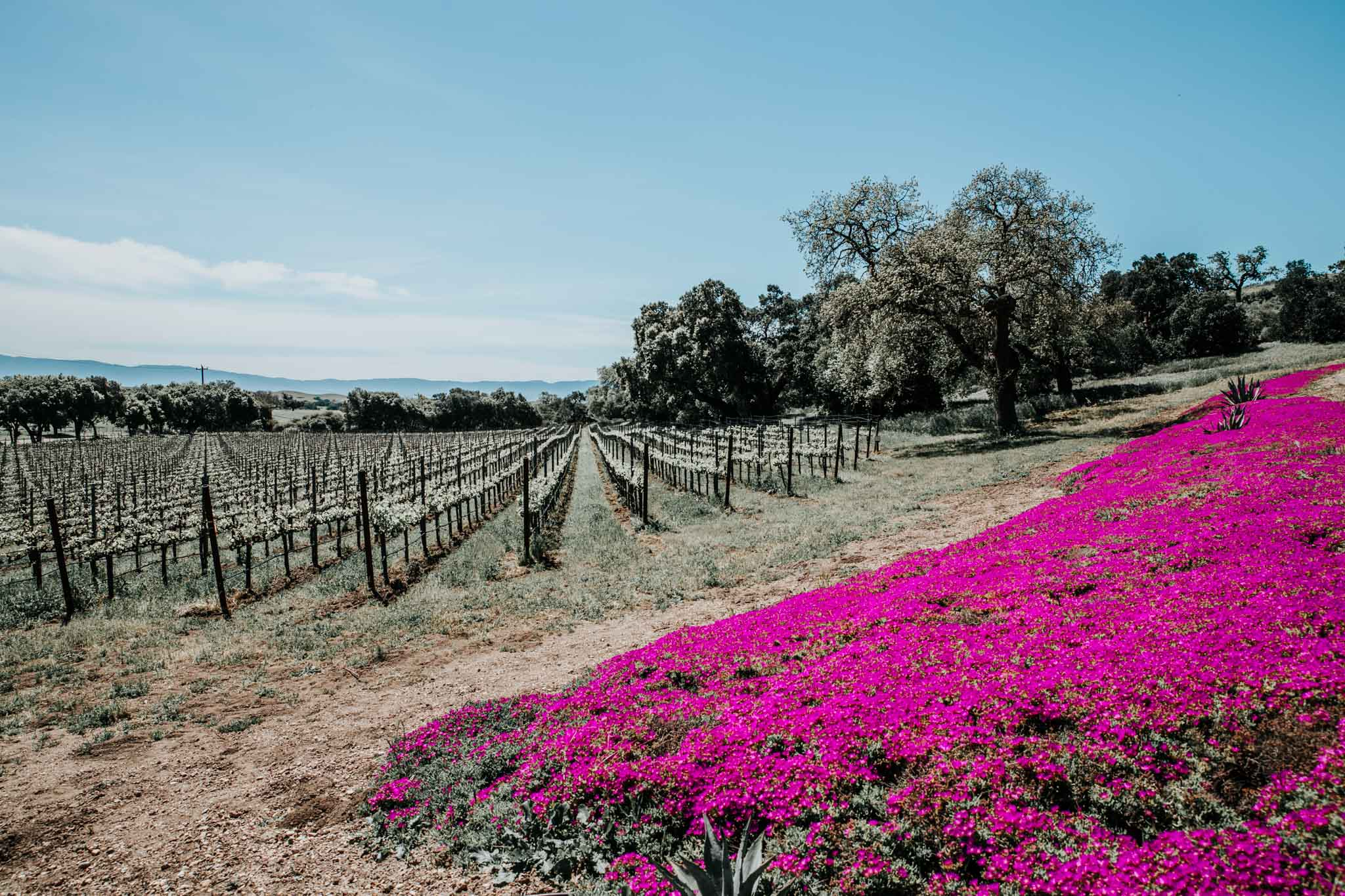Vines and colorful flowers at Demetria Estate.