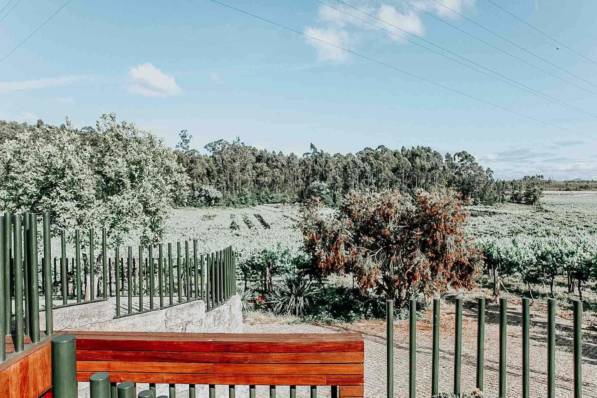 Quinta das Arcas vineyard view.