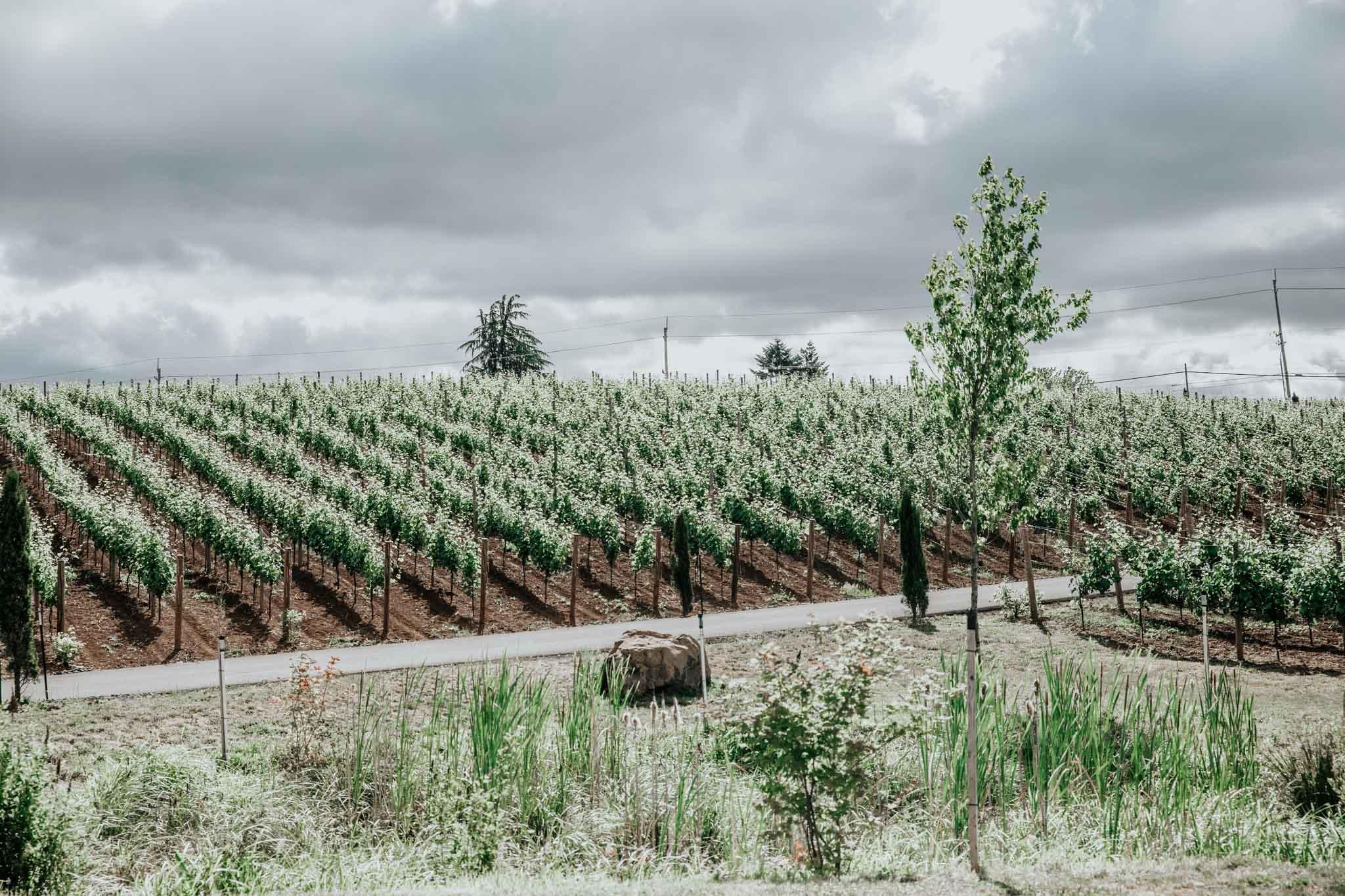 Wines at Tumwater Vineyard.